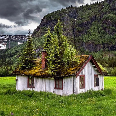 Cabin with Tree Rooftop Latitude Longitude Trees on roof cottage Hemsedal Norway