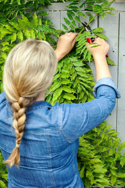 Quand Tailler Les Arbres Et Arbustes : quand, tailler, arbres, arbustes, Conseils, Réussir, Taille, Arbres, Arbustes