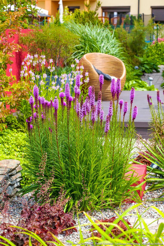 Comment Avoir Un Jardin Fleuri Toute L Année : comment, avoir, jardin, fleuri, toute, année, Plantes, Faciles, Entretenir, Toute, L'année, Détente, Jardin