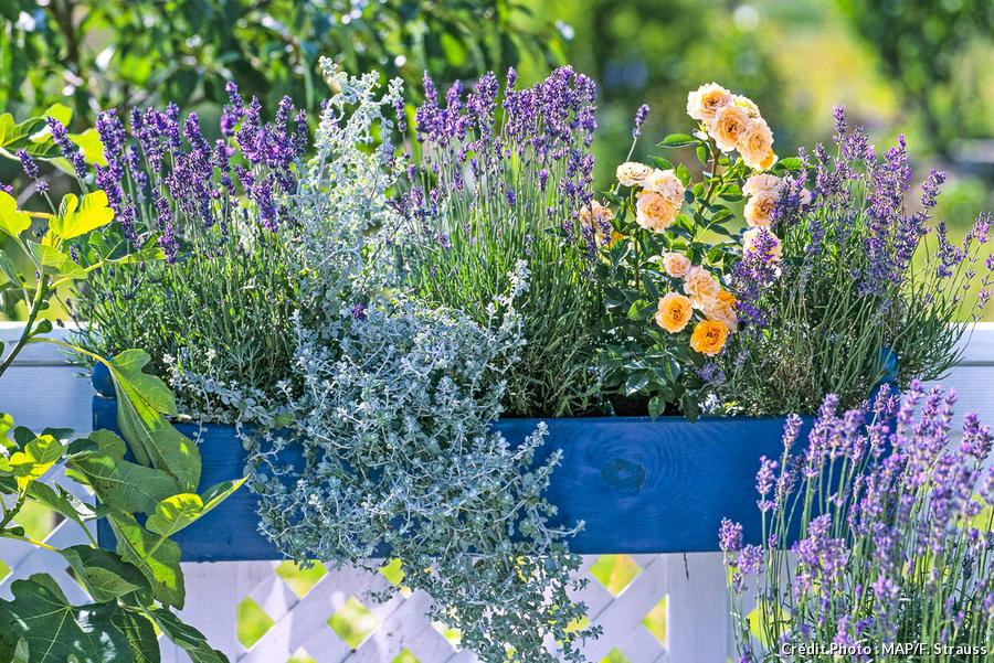 fleurs d ete jardinieres fleuries