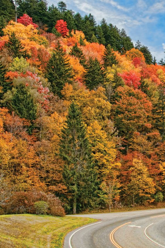 Travel   Tennessee   USA   Fall Foliage   Scenic Drives   Country Roads   Nature   Autumn