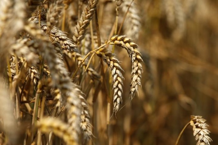 Traders: Algeria issues a tender for the purchase of wheat flour