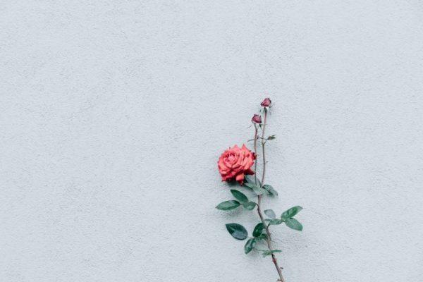 সত্য বলতে লজ্জা নেই