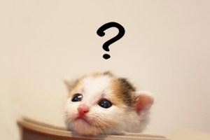安いホームページが欲しい子猫