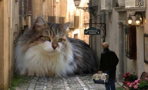 hranie mačka a myš datovania Pakistan Zoznamka chatovacej miestnosti