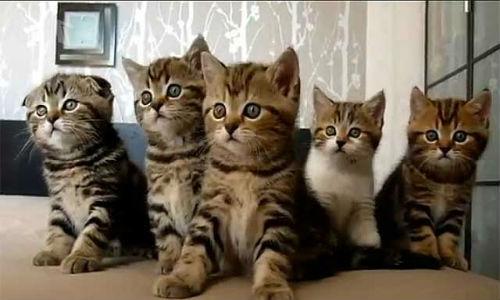 tinejdžeri s obrijanim mačkama veliki plijen ebanovina bbws