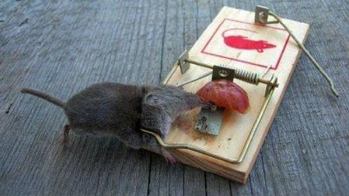 К чему снятся дохлые мертвые мыши