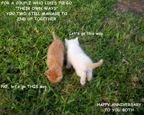 Couple Kittens Free To A Couple ECards Greeting Cards
