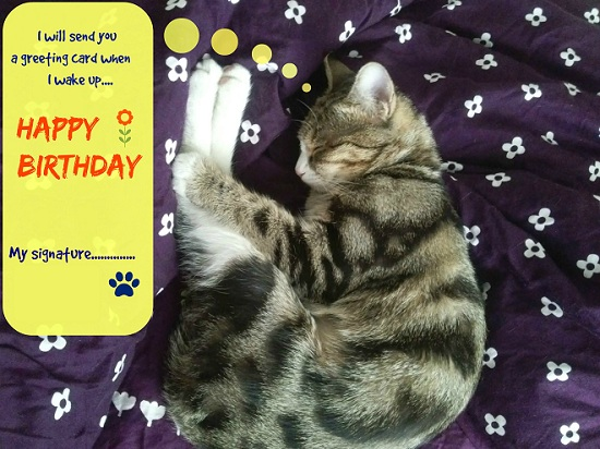 Sleeping Kitty Birthday Wish Free Belated Birthday Wishes