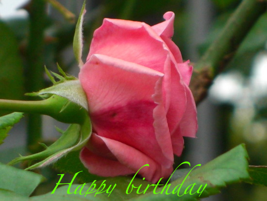 Best Wishes For B'day Free Flowers ECards Greeting Cards