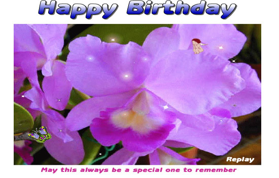 Happy Birthday With Mauve Orchids Free Happy Birthday ECards 123 Greetings