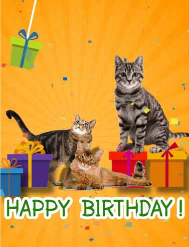 Happy Birthday With Cats Free For Kids ECards Greeting Cards 123 Greetings