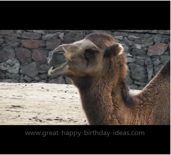 Happy Birthday Camel Card Free Specials ECards Greeting