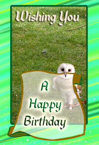 A Happy Birthday Owl Free Birthday Wishes ECards