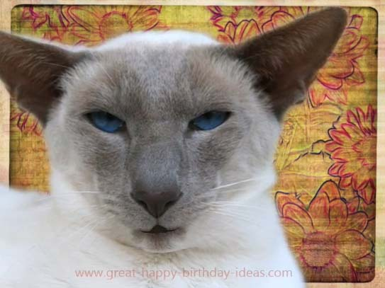 Funny Cat Birthday Wishes Free Birthday Wishes ECards