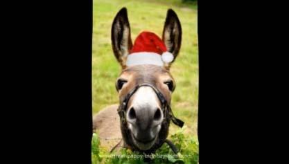 Donkeys Funny Christmas Song Free Social Greetings