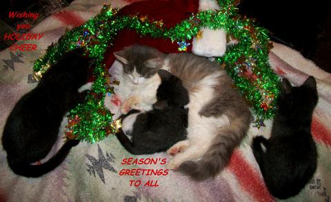 Holiday Cheer Cats Free Holiday Cheer ECards Greeting Cards 123 Greetings