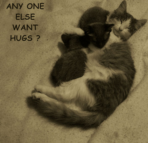 Any More Hugs Cats? Free Friendly Hugs ECards Greeting