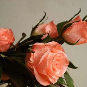 good morning free roses