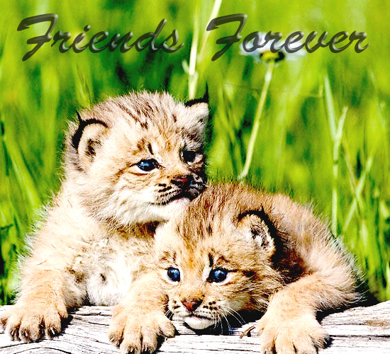 friendship forever free friends