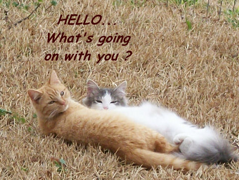 Friendship Hello Cats! Free Hello ECards Greeting Cards