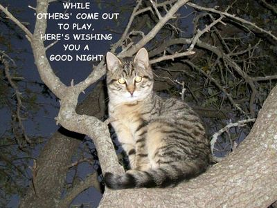 Good Night Tree Kitty Free Good Night ECards Greeting Cards 123 Greetings