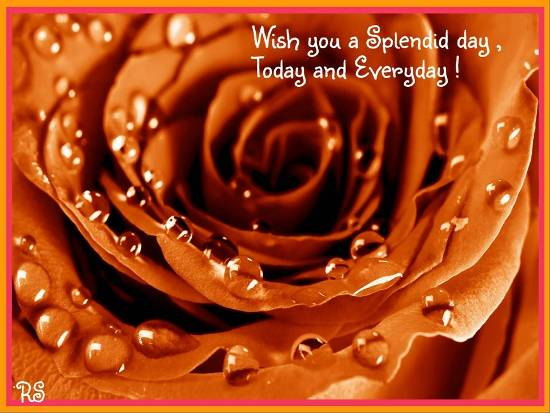 Wish You A Splendid Day Free Have A Great Day ECards