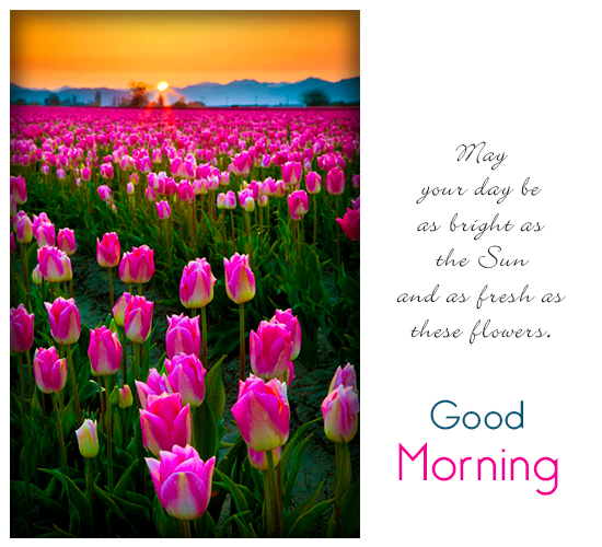 Bright Sun Bloomed Flowers Morning Free Good Morning ECards 123 Greetings