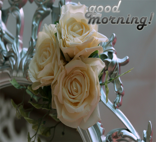 morning wishes with rose