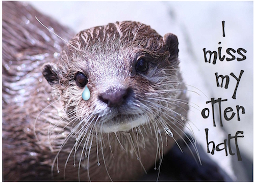 I Miss My Otter Half! Free Missing Him ECards Greeting