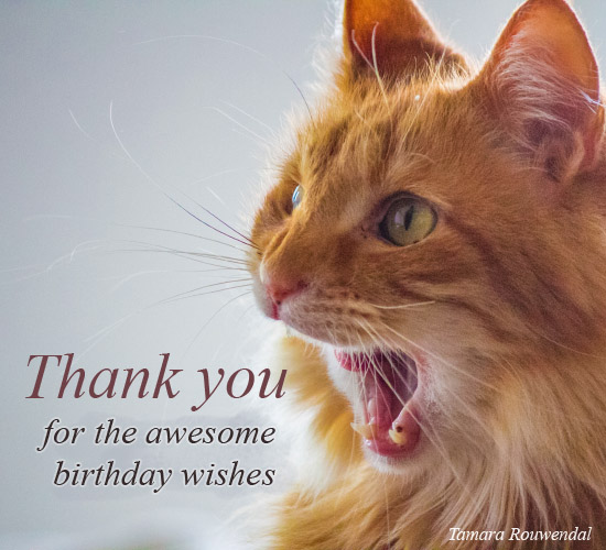 A Meowing Thank You Free Birthday Thank You ECards Greeting Cards 123 Greetings