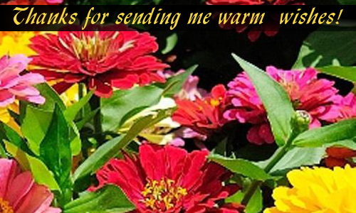 For Warm Wishes Free Congratulations ECards Greeting