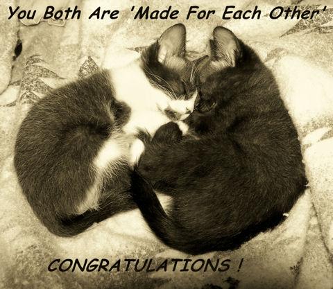 Wedding Congrat Cats Free Congratulations ECards Greeting Cards 123 Greetings