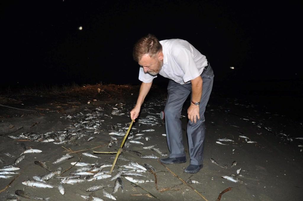 Mersin'de telef olan binlerce balık sahile vurdu