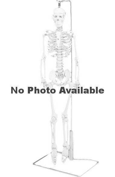 Anatomical Chart Company Flexible Mr. Thrifty Table-Size