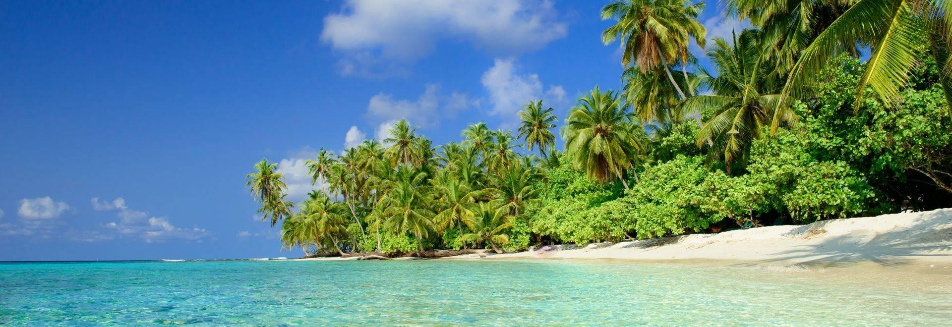 Wildlife Holidays In The Maldives Naturetrek
