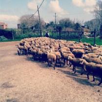 Винно-гастрономический тур Каталония