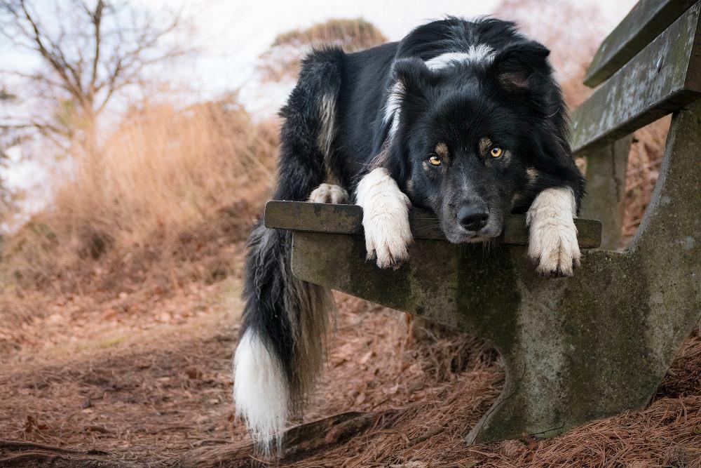 Dpoty I Love Dogs 3rd C Kirsten Van Ravenhordt The Kennel