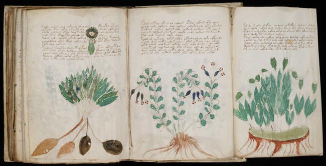 """Permalink to El manuscrito Voynich: el misterio del """"libro que nadie ha podido leer"""" puede estar a punto de resolverse"""
