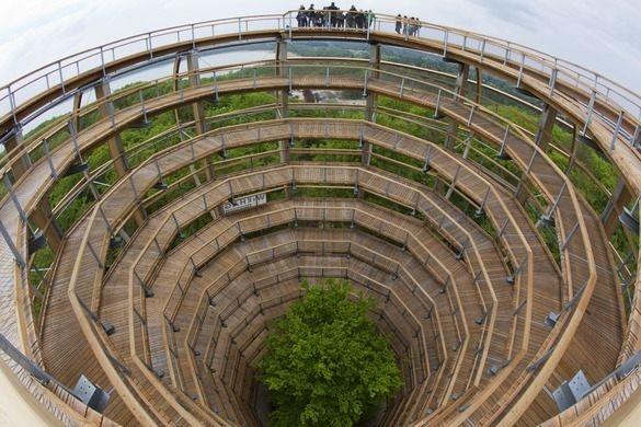 La larga pasarela en espiral que serpentea a través del bosque y alrededor de un haya de cobre en el centro que hay en Alemania