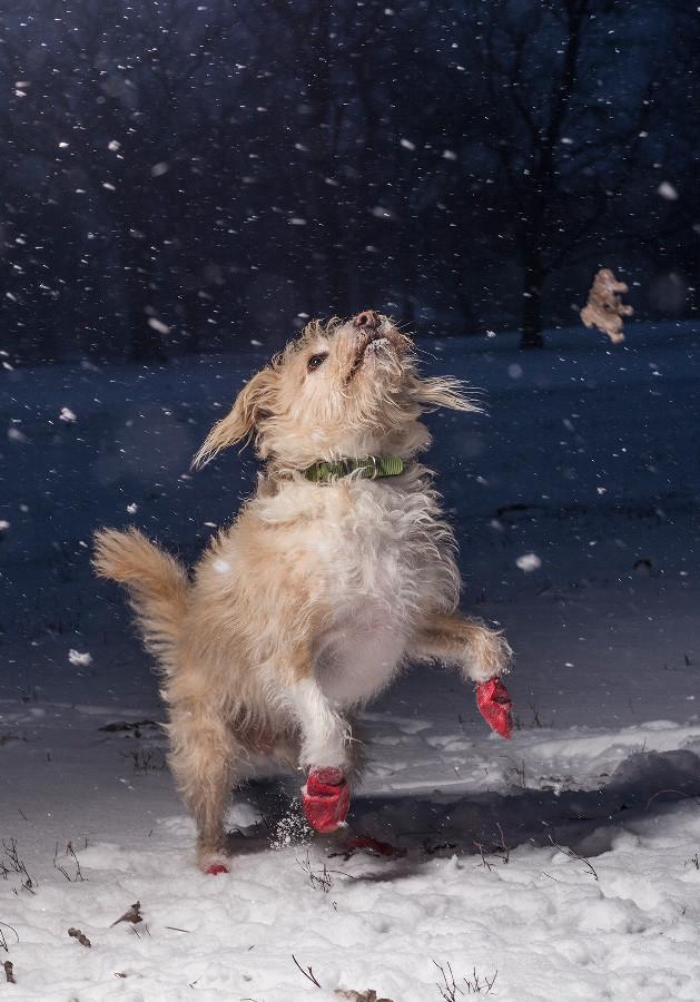 Dpoty I Love Dogs 1st C Julian Gottfried The Kennel