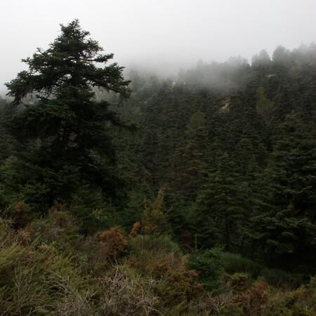 Bosque De Pinsapos