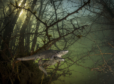 C Joao Rodrigues Wildlife Photographer Of The Year
