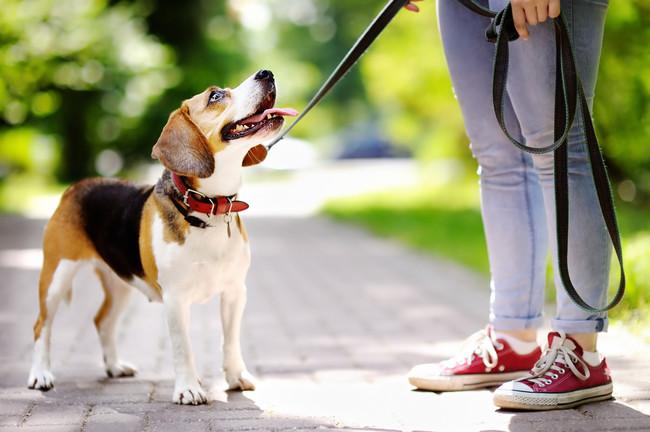 perro-pasear-salud