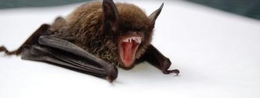Lo que guardan los murciélagos: un nuevo virus chino de la familia del Ébola será clave para aprender a combatirlos mejor