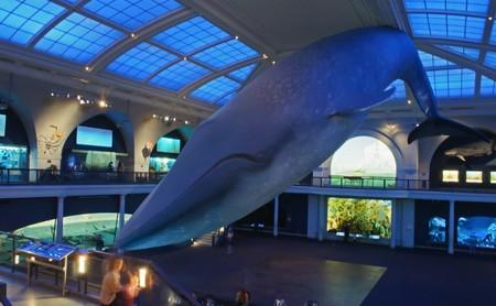 Museo Historia Natural Americano Nueva York