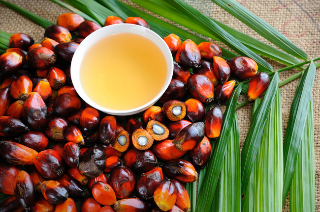 Permalink to En un giro de guion sin precedentes, el aceite de palma resulta ser una herramienta imprescindible para defender biodiversidad
