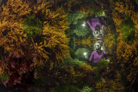 C Justin Gilligan Wildlife Photographer Of The Year