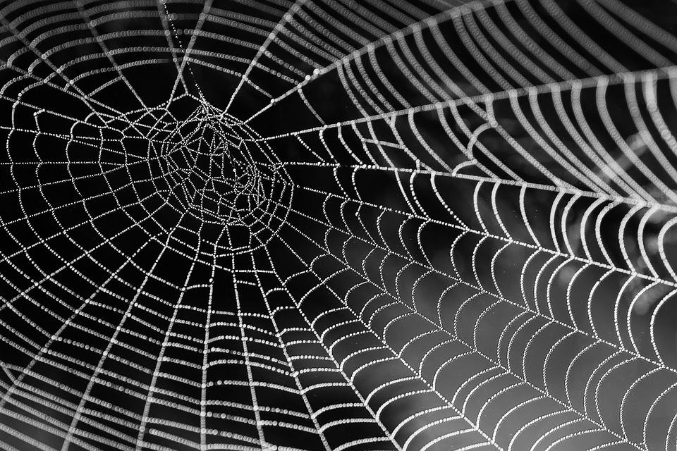 Tela de araña como músculo robótico? Sí, es posible