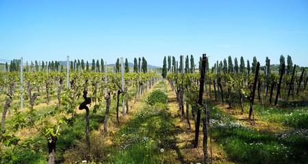 Vineyards 5096698 1920